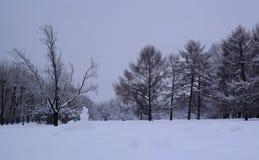 Bosque mezclado en el estado después de nevadas, Moscú, Rusia de Kolomenskoye Imagen de archivo libre de regalías