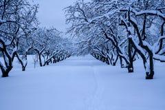 Bosque mezclado en el estado después de nevadas, Moscú, Rusia de Kolomenskoye Foto de archivo