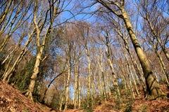 Bosque mezclado en invierno, sin nieve imagen de archivo