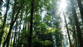 Bosque mezclado en la opinión panorámica de la tarde del verano, movimiento de la cámara almacen de metraje de vídeo