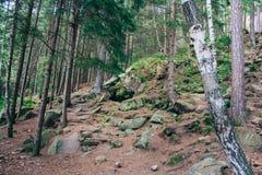 Bosque mezclado en las montañas cárpatas Imagen de archivo libre de regalías