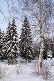 Bosque mezclado en nieve del invierno Foto de archivo