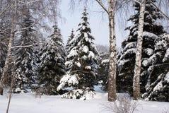 Bosque mezclado en nieve del invierno Foto de archivo libre de regalías