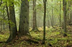 Bosque mezclado natural Imagen de archivo libre de regalías