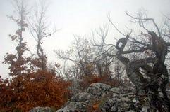 Bosque misterioso Foto de archivo libre de regalías
