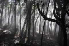 Bosque misterioso Fotos de archivo libres de regalías