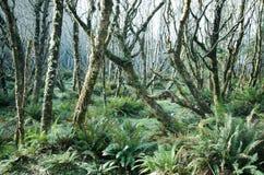 Bosque misterioso Imagen de archivo libre de regalías