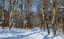 Bosque misterioso Imagenes de archivo