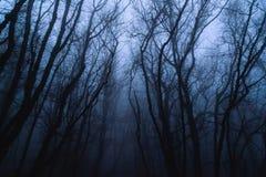 Bosque misterioso brumoso Fotos de archivo