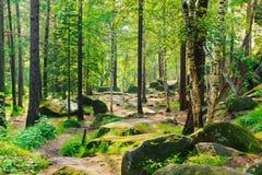 Bosque misterioso con los árboles verdes, las piedras grandes y el sol brillante Fotos de archivo libres de regalías