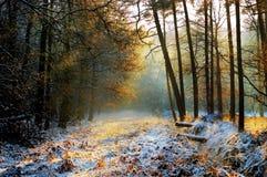Bosque misterioso en invierno Foto de archivo libre de regalías