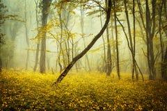 Bosque misterioso en niebla con las hojas de la naranja y las flores amarillas Imagenes de archivo