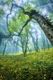 Bosque misterioso en niebla con las hojas del verde y las flores amarillas Fotografía de archivo libre de regalías