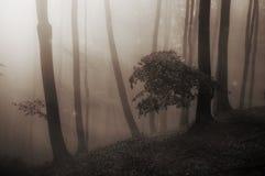 Bosque misterioso encantado cuento de hadas con niebla Foto de archivo libre de regalías