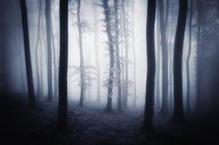 Bosque misterioso etéreo de Dar con niebla fotos de archivo libres de regalías