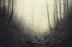 Bosque misterioso frecuentado Imagen de archivo