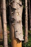 Bosque muerto Foto de archivo