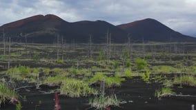 Bosque muerto cerca del vídeo común de la cantidad de los volcanes almacen de metraje de vídeo