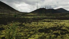 Bosque muerto cerca del vídeo común de la cantidad de los volcanes metrajes