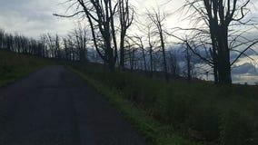 Bosque muerto en el paso de montaña almacen de video