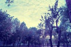 bosque na luz violeta místico Fotografia de Stock Royalty Free
