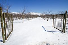 Bosque na neve imagem de stock royalty free