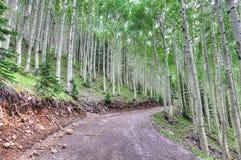 Bosque nacional de AZ-Coconino cerca del rastro interno del lavabo Fotografía de archivo libre de regalías