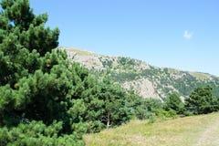 Bosque natural asombroso de la montaña del verde de la mirada Imágenes de archivo libres de regalías