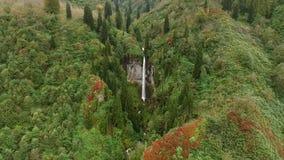 Bosque natural de Forest Long Trees In Autumn de la cascada almacen de metraje de vídeo