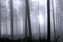 Bosque nebuloso Imágenes de archivo libres de regalías