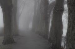 Bosque nebuloso Imagen de archivo libre de regalías