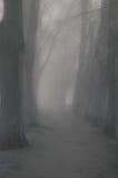 Bosque nebuloso Imagenes de archivo