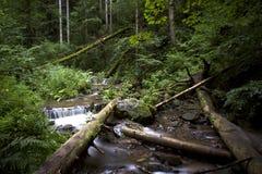 Bosque negro Alemania Fotos de archivo
