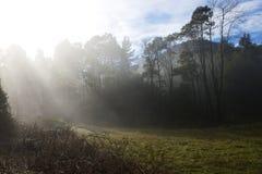 Bosque negro del rango foto de archivo