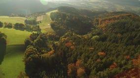 Bosque negro en el otoño almacen de metraje de vídeo
