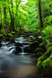 Bosque negro en la primavera Imagen de archivo