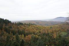 Bosque negro en otoño Fotos de archivo