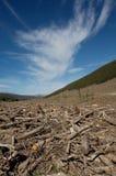Bosque neto Imagenes de archivo