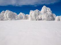 Bosque Nevado. Fotografía de archivo libre de regalías