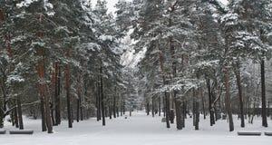 Bosque Nevado Fotografía de archivo libre de regalías