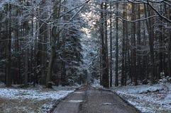 Bosque Nevado Imagen de archivo