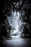 Bosque Nevado Foto de archivo libre de regalías