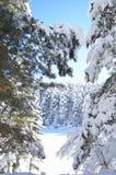 Bosque Nevado con los abetos en towads del largo camino del bilecik del pavo del invierno el lago congelado bosque Imagenes de archivo