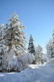 Bosque Nevado con los abetos en towads del largo camino del bilecik del pavo del invierno la madera Foto de archivo libre de regalías
