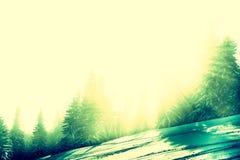 Bosque Nevado con rayos solares Fotografía de archivo libre de regalías