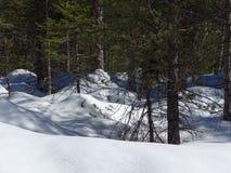 Bosque Nevado de Isartal Fotos de archivo