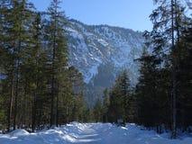 Bosque Nevado de Isartal Imagen de archivo