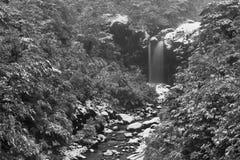 Bosque nevado de la montaña con la cascada, en blanco y negro fotografía de archivo libre de regalías