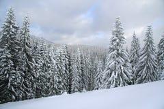 Bosque nevado de la Navidad. Picea nevada fotografía de archivo