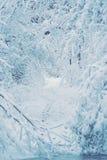 Bosque nevado de las plantas de los árboles en filtro del invierno Foto de archivo